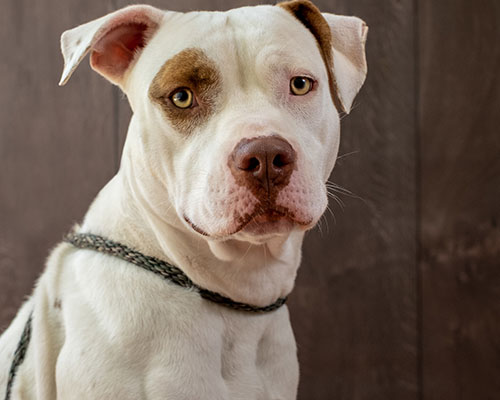 adoptable dog at Animal Hope